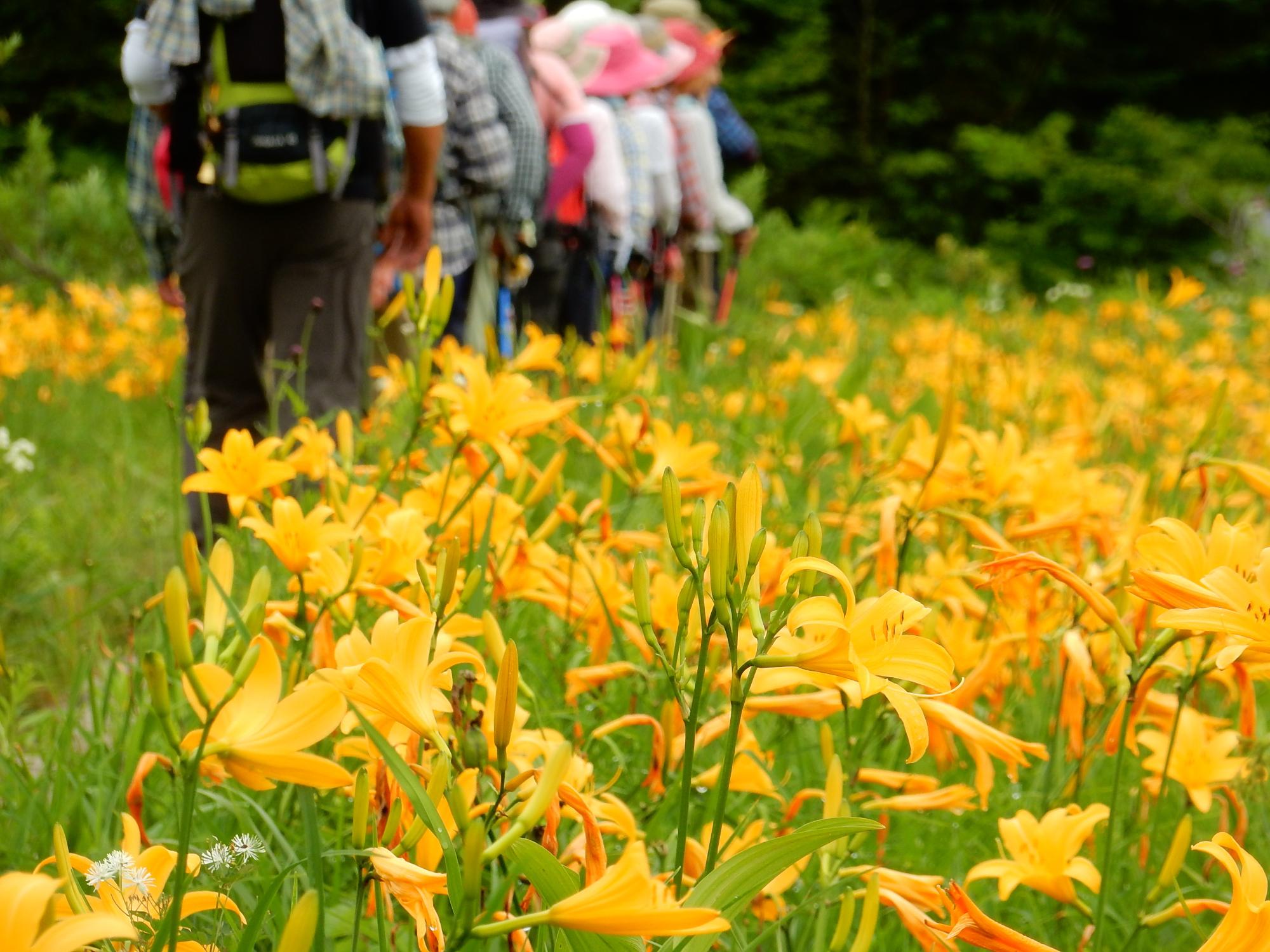 尾瀬国立公園 (おぜこくりつこうえん)写真