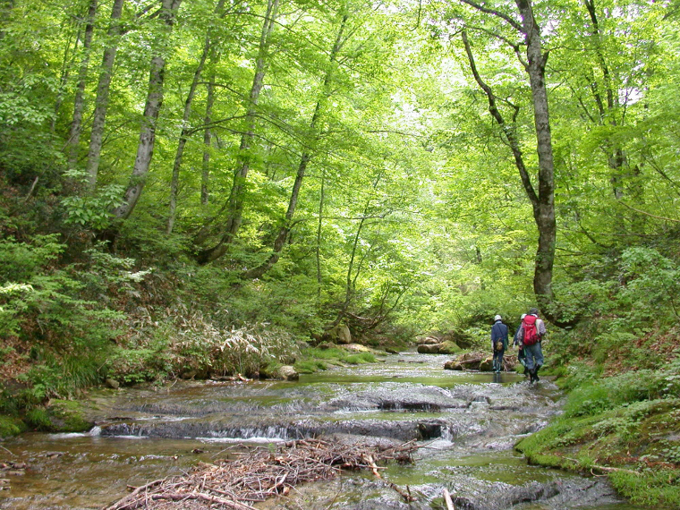 恵みの森・癒しの森 ブナ林散策写真