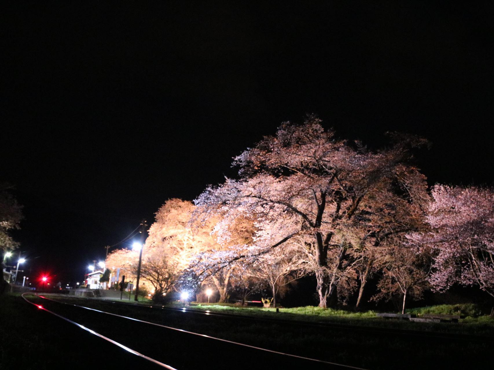 会津鉄道 お花見列車写真