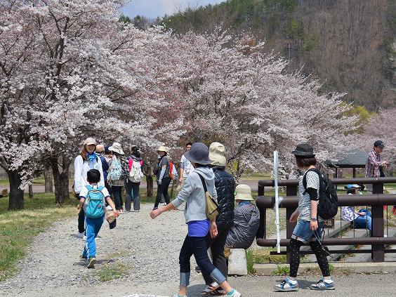 南山の桜と歴史めぐりウォーク2019写真
