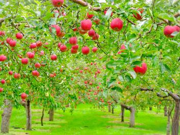 りんご直売マップ
