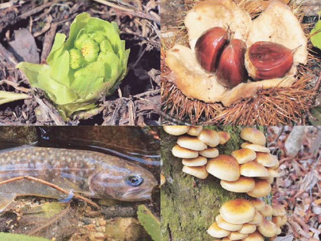 只見町ブナセンター 企画展アーカイブ「只見の自然を食べる」写真